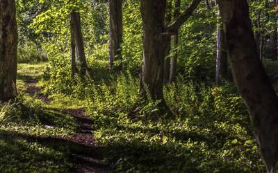 Nature2015Trois-Rivières